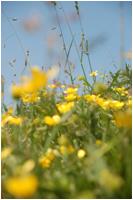 Tarieven :bloemen