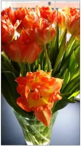 tulips Rotterdam accommodation